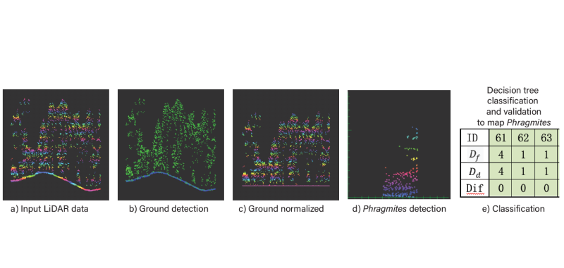 Early Detection of Invasive Phragmites australis at the Tidal Marsh-Forest Ecotone with Airborne LiDAR